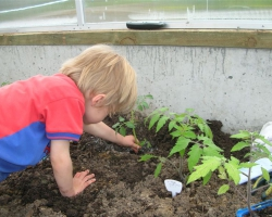 Our 3 year old learning to plant tomatoes